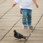 мальчик гоняет голубей