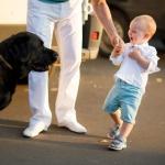 фотография  мальчика и большой собаки